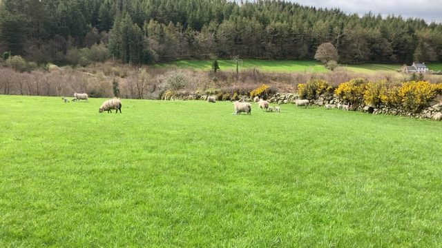 Grass advice: Setting up the farm for the weeks ahead
