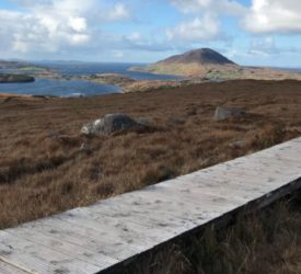 Rhododendron clearance plan announced for Connemara