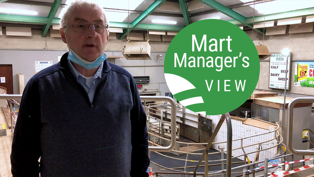 'Trade slightly improved' at Ennis Mart as lamb prices hit €147/head