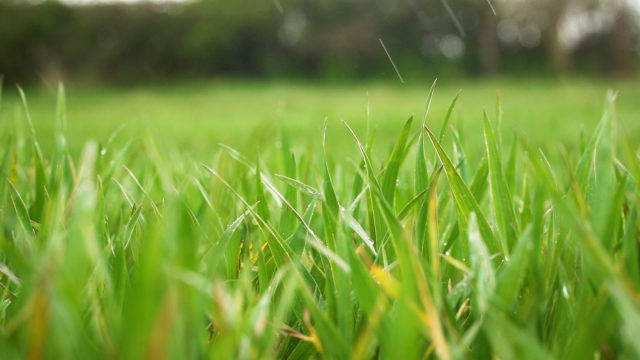 Crops Watch: The use of INATREQ in winter wheat