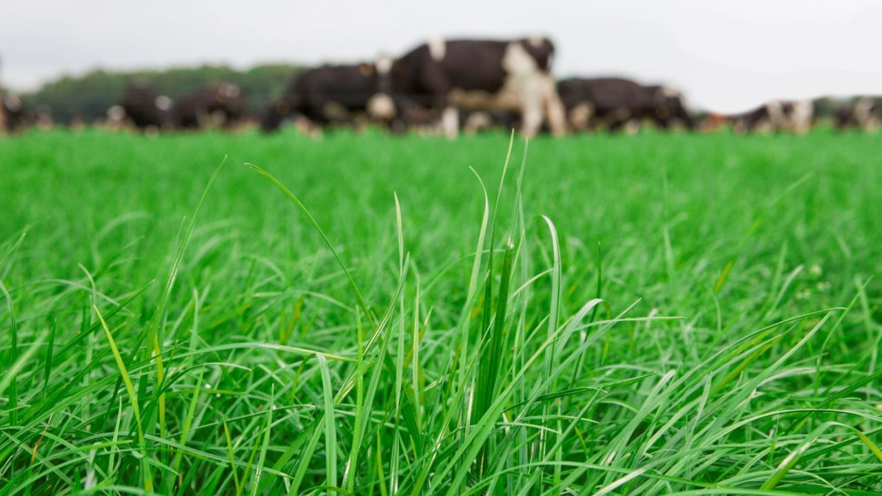 Exciting new grassland weedkiller product available now