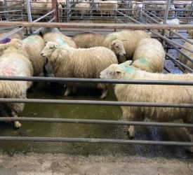 Shipments of Irish sheepmeat to the UK fall again