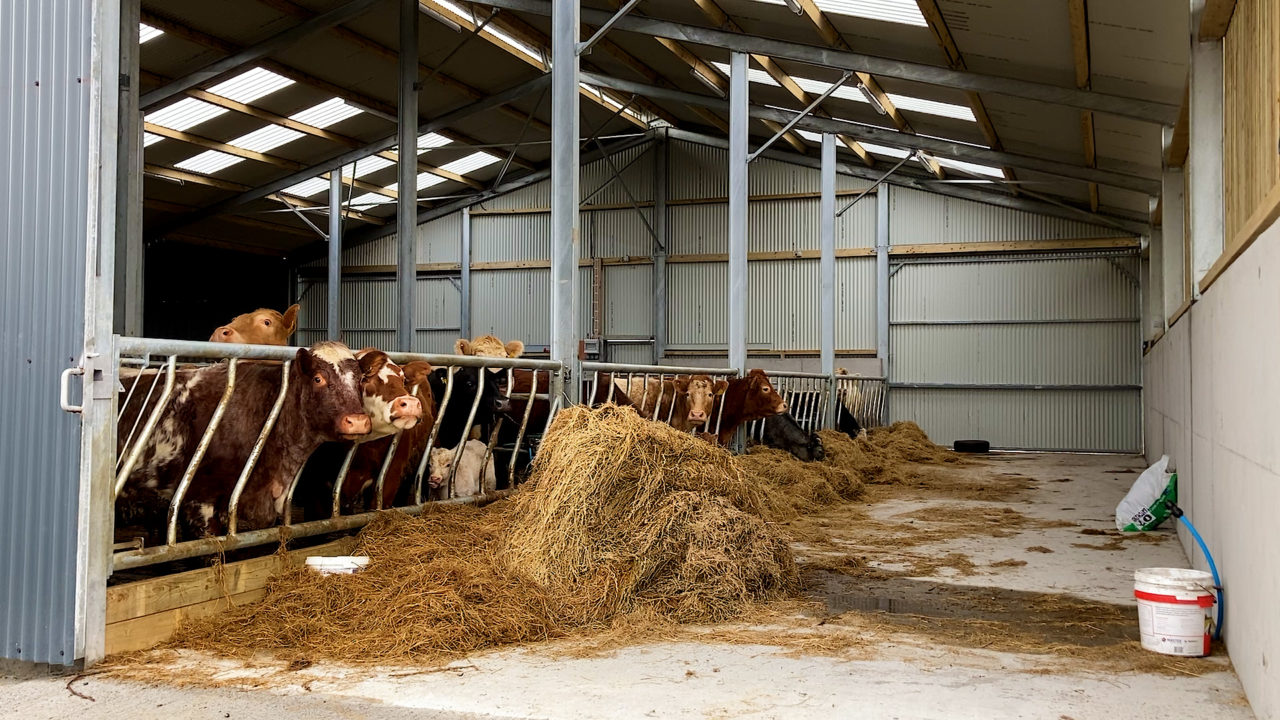 Buildings Focus: 4-bay suckler unit with a creep and calving area in Co. Galway