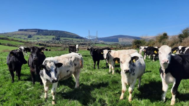 'Weather conditions resulted in variable start to grazing season' – Green Acres farmer