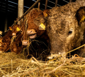Beef prices strengthen with €4.00/kg base 'freely available'