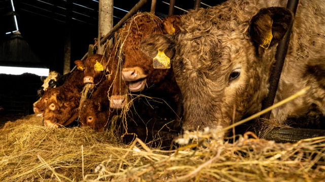 Winter beef finishers will need €5/kg as input costs soar