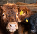 Beef trade: Positive price trends continue for the first week of May