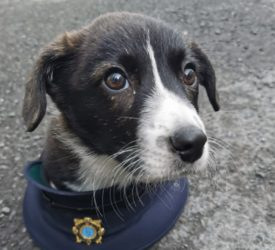 Pup recovered and man charged following theft of litter
