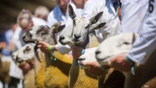 Royal Highland Showcase reveals livestock entry figures for 2021 show