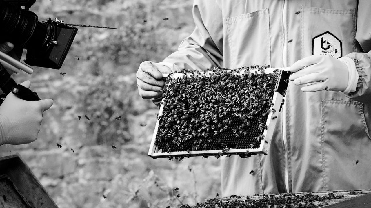 Cork agtech company revolutionising beekeeping