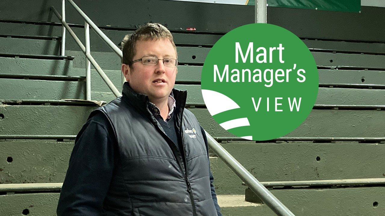 'Spring lambs really starting to come out in force' at Ballymote Mart