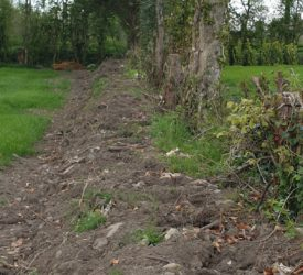 Gardaí in Meath investigating theft of 200 plants from field