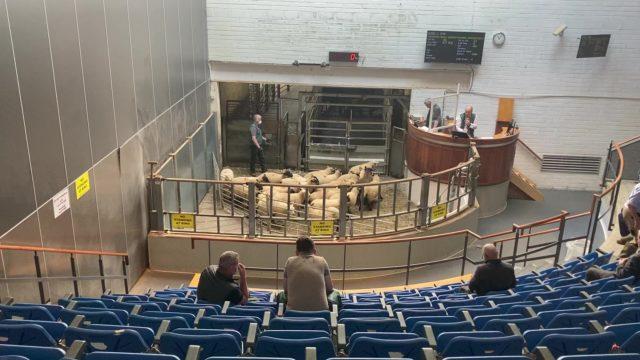 来自MART的照片:羊羔和伊威尔价格在星期一的基尔肯尼的价格