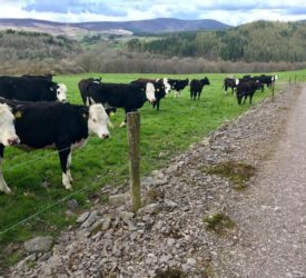 Teagasc Green Acres: Maximising animal performance in the Nire Valley