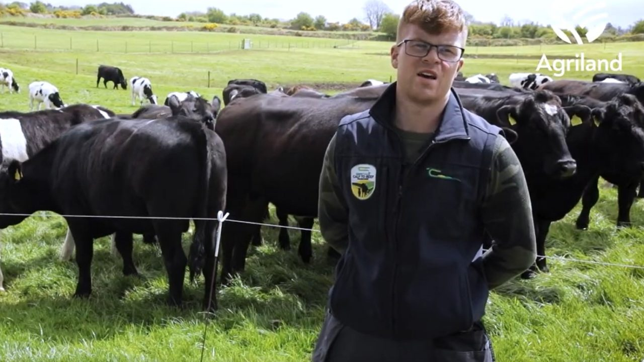 Virtual Farm Walk: Follow Jarlath Ruane as he runs through his calf-to-beef farm