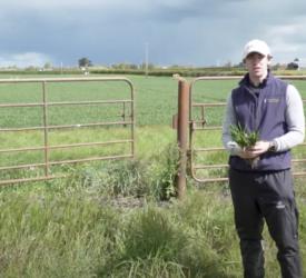 作物观察:罗伯特·贝蒂博士给出了他的冬小麦疾病控制更新。