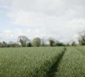 作物观察:罗伯特·贝蒂博士谈冬小麦作物的利润最大化。