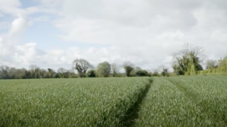 Crops Watch: Dr Robert Beattie on maximising profitability of winter wheat crops.