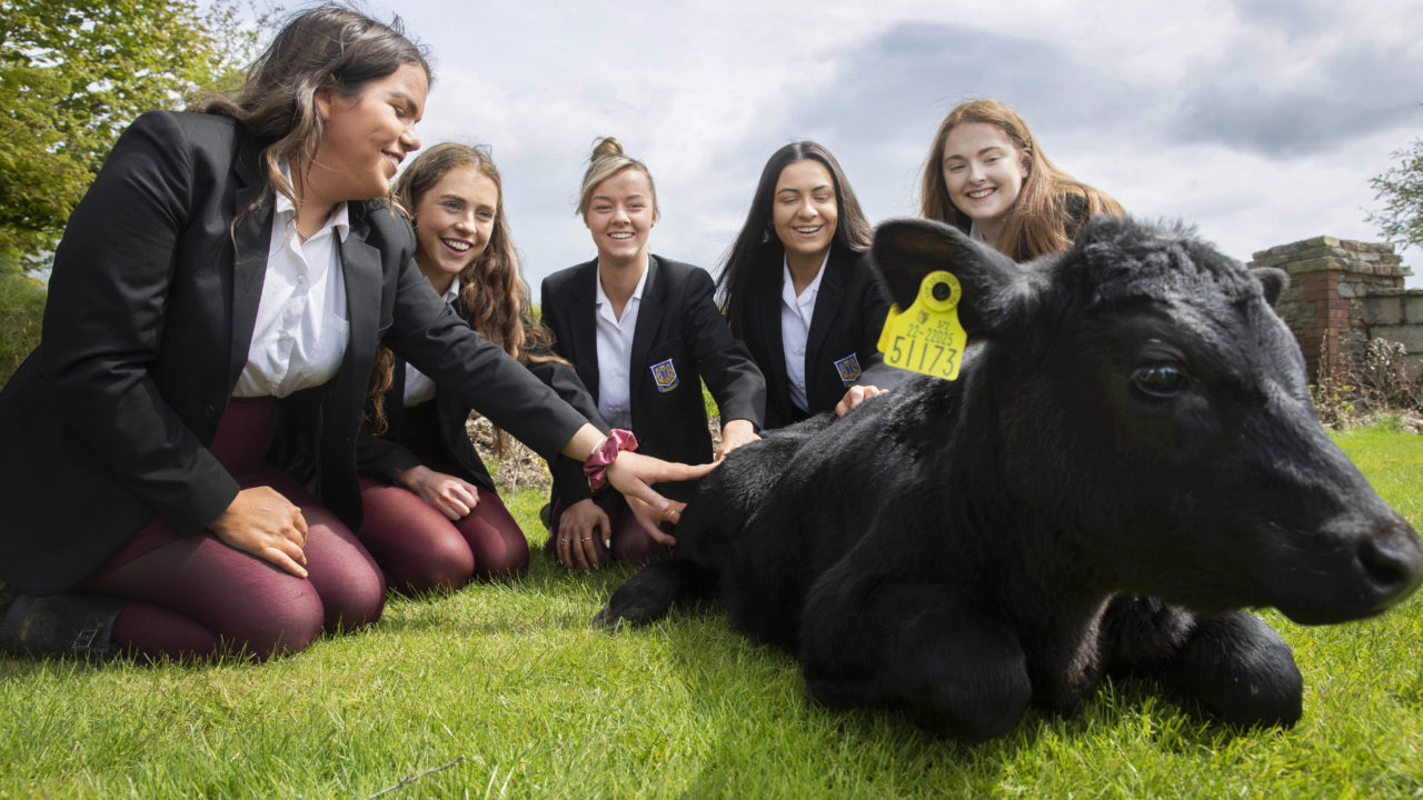 Non-farming students scoop top award at Certified Irish Angus competition