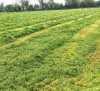 恢复活力的草地:哪种选择最好?
