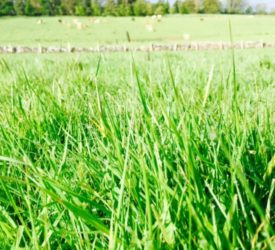 Boosting carbon sequestering – without reducing grass productivity