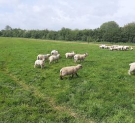 Sheep management: Maximising lamb performance