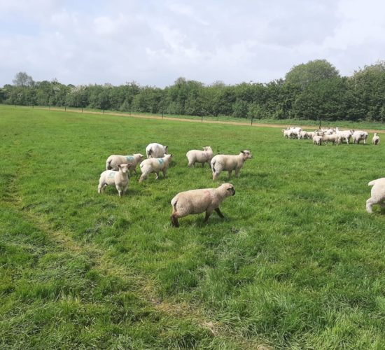 Recent rainfall welcomed as grass growth starts to drive on again