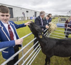 13 teenagers take calves home to rear in ABP's agri-skills contest