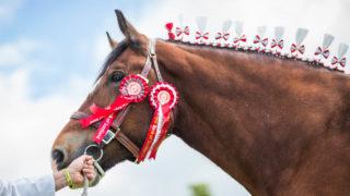 Royal Highland Showcase reveals equestrian entry figures