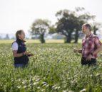 Glanbia seeks additional gluten-free oat growers