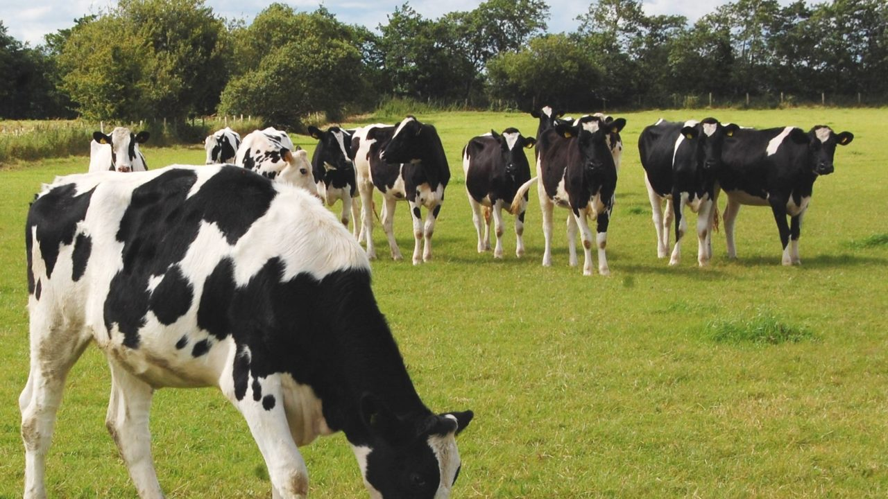 Could new feed additives solve the methane conundrum?