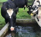 Grazing infrastructure: Does your water system need upgrading?