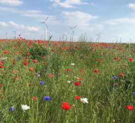 Bayer launches decarbonisation programme for agriculture in Europe