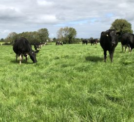 Alltech ONE: 'The dairy story is not told well enough'