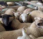 来自Mart的照片:星期一,羊羔上衣170欧元/龙头