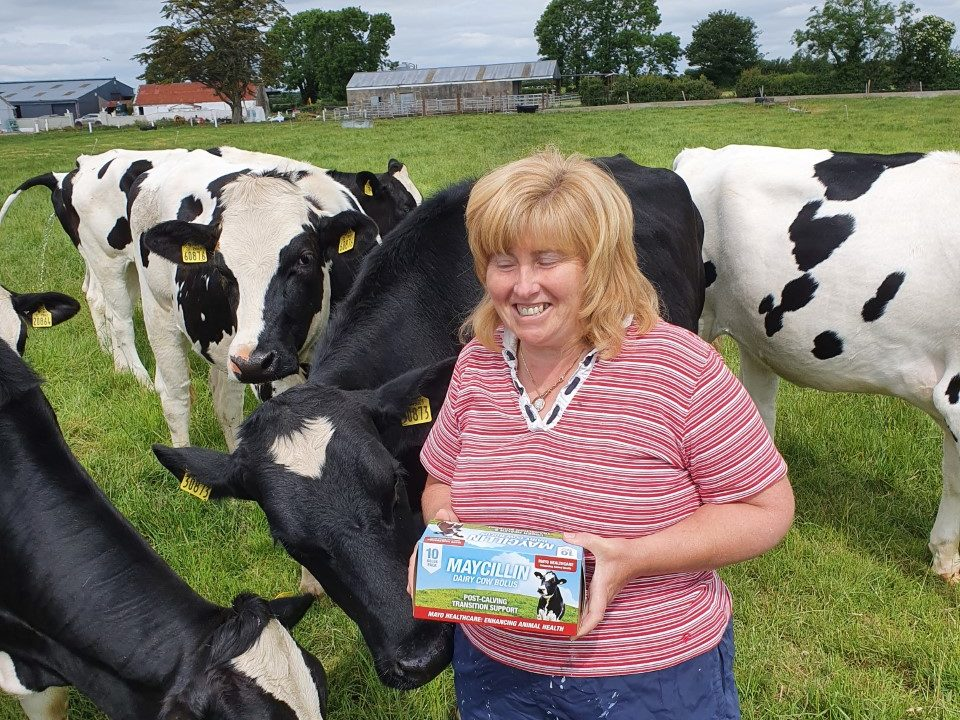SCC reduction: Limerick farm cuts count by 58% in under 2 years