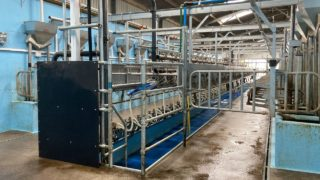 A 28-unit parlour for a 280-cow herd in Co. Cork