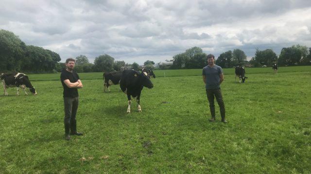 betway客户端关注乳品业:减少奶牛,减少牛奶,增加劳斯公司的利润