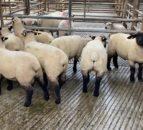 北羊贸易:增加供应量对价格下跌