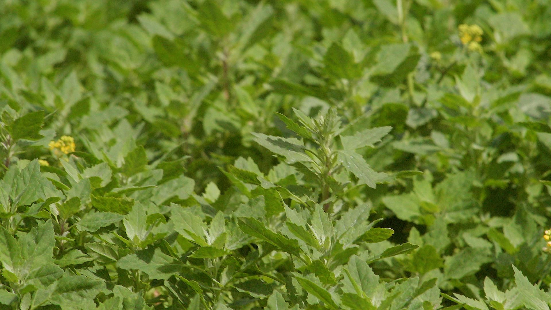 Targeting beet inputs towards crop performance