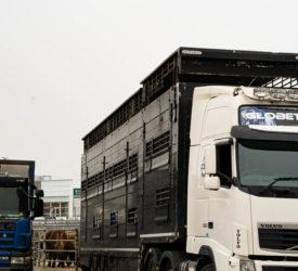 信息产业部欢迎英国宣布推迟进口管制