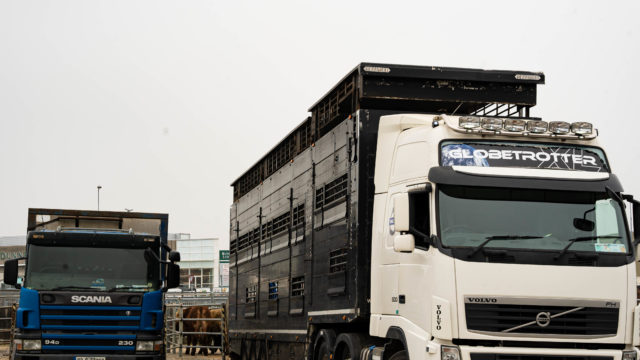 High court challenge to livestock export ban adjourned for a fortnight