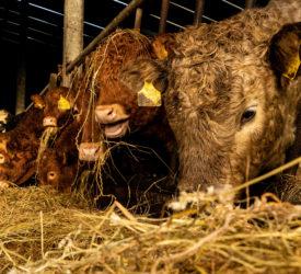 "rabobank:在全球牛肉市场推动""记录价格""的因素"
