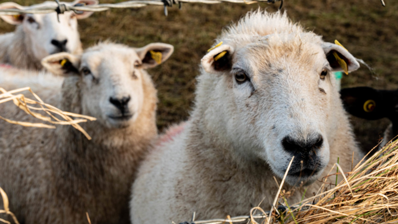 NI farm trials to test willow's ability to reduce methane emissions