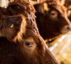 英国 - 澳大利亚交易:目不的是农业保障措施是否足够远
