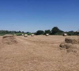 Vandals rip netting and damage hay bales in Cork