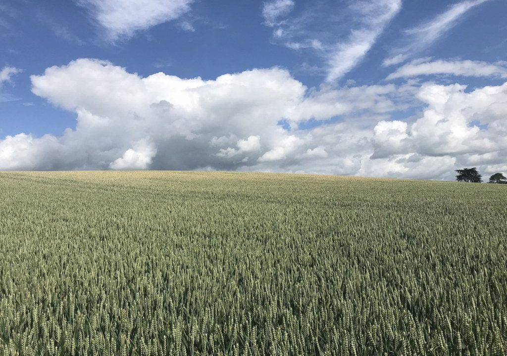 40ac Wexford roadside holding with farmyard and residential potential