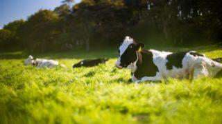 牛胃细菌能降解合成塑料-研究