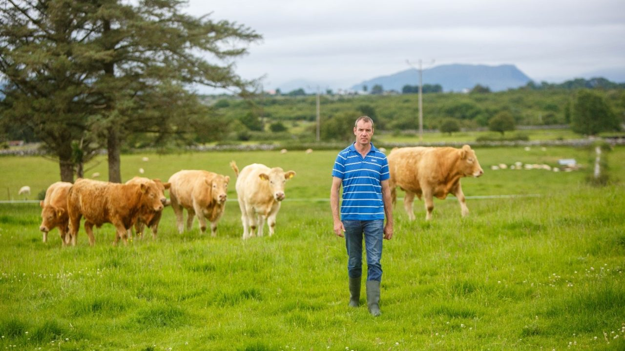 Little and often approach to liming is a win-win solution for Mayo drystock farmer