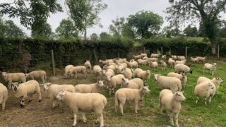 Eid boosts lamb prices in the UK